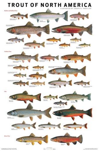 amazon the trout of north america joseph r tomelleri fish