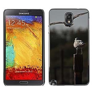 hello-mobile Etui Housse Coque de Protection Cover Rigide pour // M00137911 Los pájaros de mar Vuelo Posición // Samsung Galaxy Note 3 III N9000 N9002 N9005