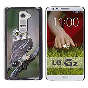 Be Good Phone Accessory // Dura Cáscara cubierta Protectora Caso Carcasa Funda de Protección para LG G2 D800 D802 D802TA D803 VS980 LS980 // owl surprised feathers nature wings