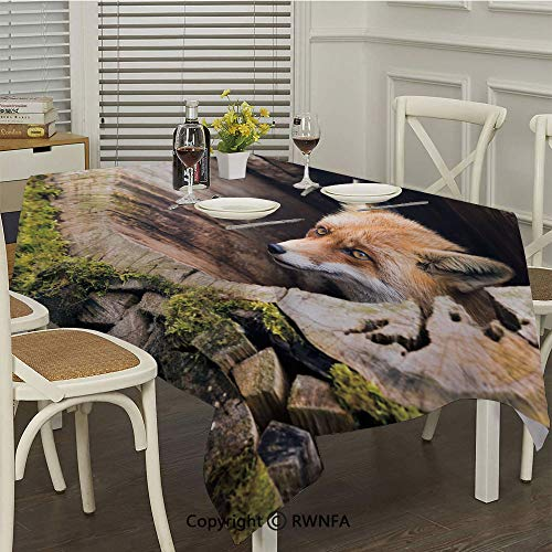 RWNFA Rectangular Tablecloth,Forest Nature Wild Fox with Hazel Eyes in a Wooden Carved Tree wth Moss Art Print(50