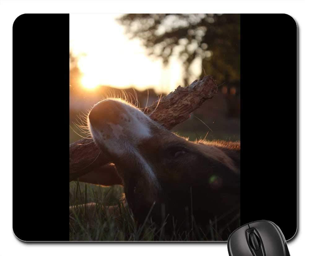 犬用マウスパッド 1122-009 220*180*3 mm B07L4TTCLN Fl1 260*210*3 mm 260*210*3 mm|Fl1
