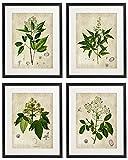 IDIOPIX Vintage Botanical Floral Print Art Home Wall Art Print No.4 Set of 4 Prints UNFRAMED
