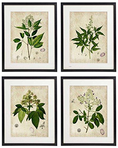 IDIOPIX Vintage Botanical Floral Print Art Home Wall Art Print No.4 Set of 4 Prints UNFRAMED by IDIOPIX