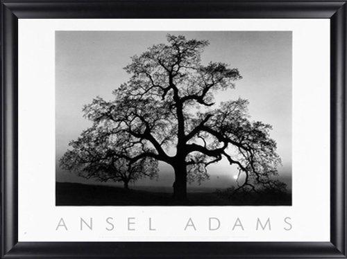 - Oak Tree Sunset City Ca Ansel Adams 34x28 Gallery Quality Framed Art Print Landscape B&W Photography