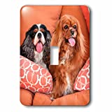 3dRose Danita Delimont - Dogs - Cavaliers on pillows, MR - Light Switch Covers - single toggle switch (lsp_258242_1)