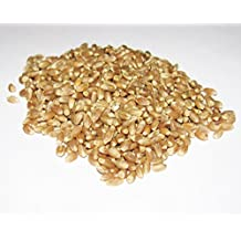 Organic Wheatgrass Seeds (Canadian Hard Red ) For Sprouting (1lb) * Detox and Blood Cleanser * Chlorophyll Source To Fight Inflammation and Arthritis