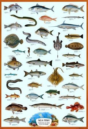 Poster 'Pesci di mare, in inglese, francese e italiano', Dimensione: 69 x 101 cm Poster 'Pesci di mare francese e italiano' Poster Revolution