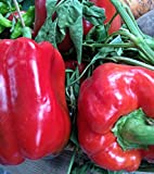 Premier Seeds Direct Pepper Sweet Asti Red includes 150 Seeds