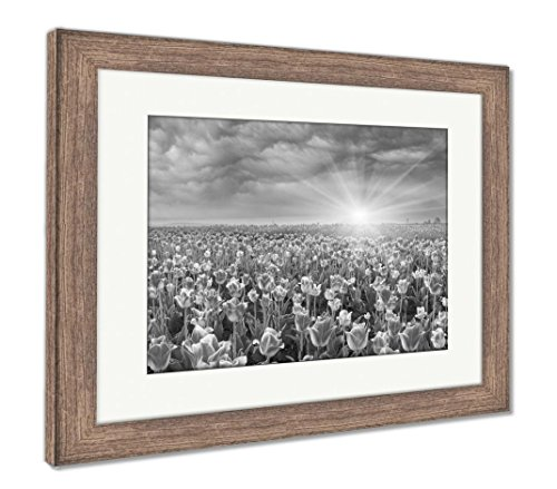 Field of Tulips in Chernivtsi, Wall Art Home Decoration, Black/White, 30x35 (Frame Size), Rustic Barn Wood Frame, AG6191344 ()