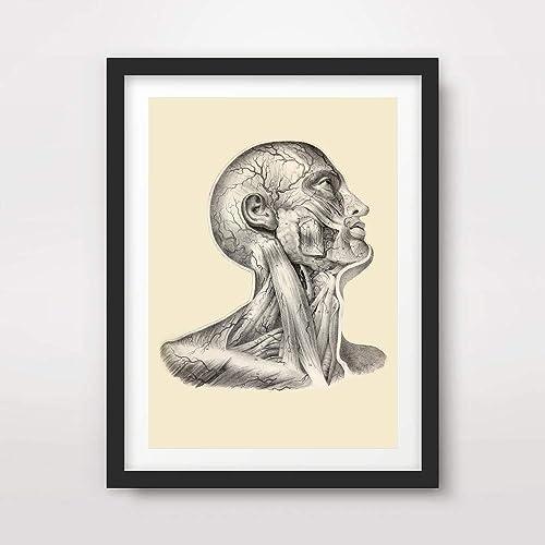 51a8hv41f2L._SY500_ amazon com head face muscles medical art print anatomical anatomy