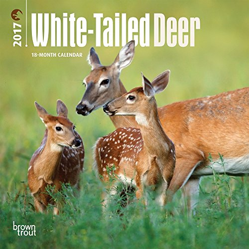 "White Tailed Deer 2017 Mini Calendar 7"" x 7"""