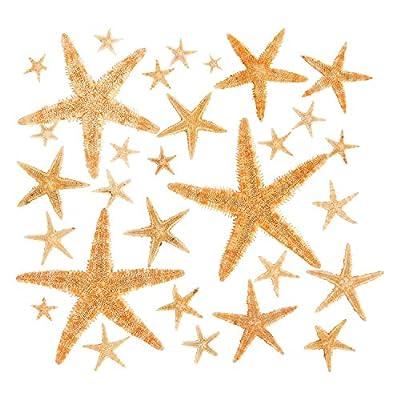 Fun Express Real Starfish Decoration (30 Piece): Toys & Games