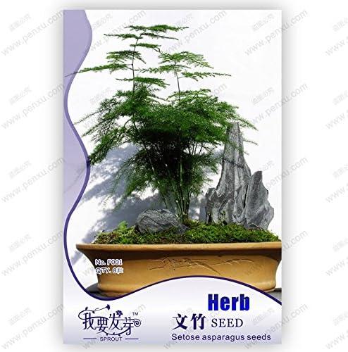 Paquete original 8 semillas / pack, semillas de helecho espárrago, Asparagus setaceus bonsaiTree, árboles en maceta del balcón, semillas de plantas: Amazon.es: Jardín