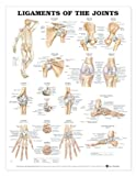 Ligaments of the Joints Anatomical Chart, Anatomical Chart Company Staff, 1587794535