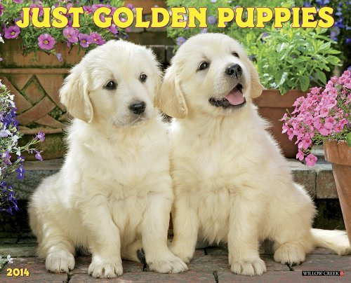 Just Golden Puppies 2014 Wall Calendar by Willow Creek Press (2013-07-12)