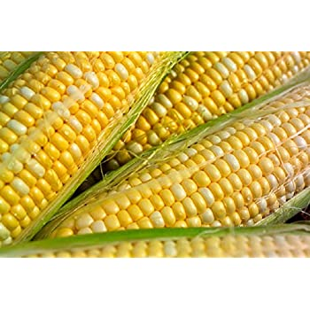 corn-mature-from-seed-lyrics-dick-in-your-ear-boi