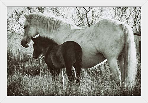 Baby Foal - 3
