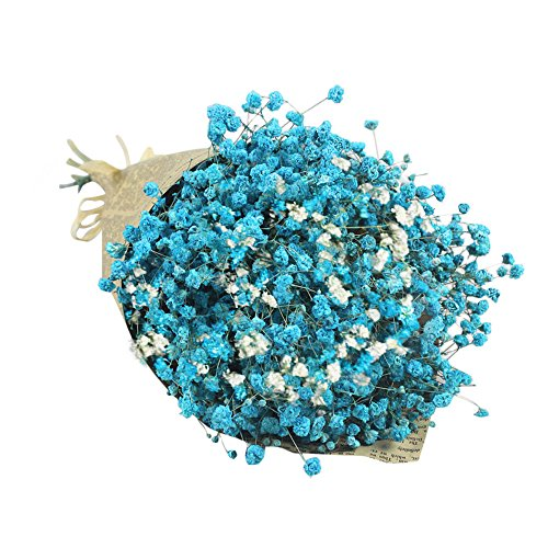 Star Flower Stem - Natural Dried Flower Baby's Breath Home Decor Flower Full Stars Gypsophila Dried Flowers Real Flower Bouquet (Blue)