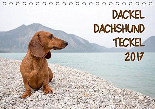 DACKEL DACHSHUND TECKEL 2017 (Tischkalender 2017 DIN A5 quer): Mit dem Dackel durch's Jahr (Monatskalender, 14 Seiten ) (CALVENDO Tiere)