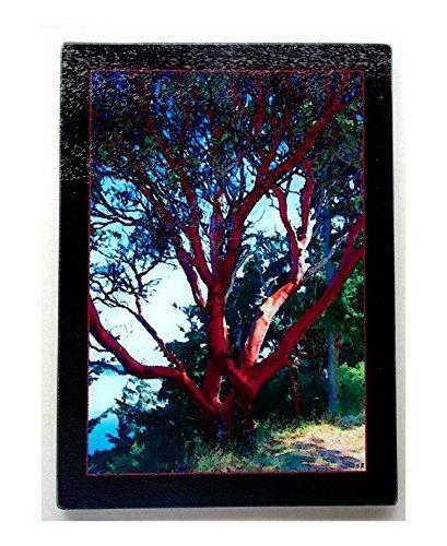 Madrona glass cutting board size 11.25 X 7.875 - Madrona Board