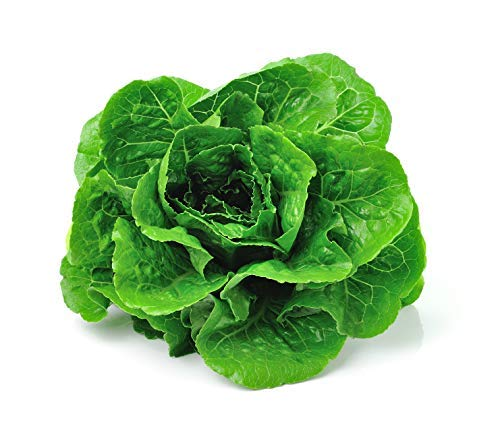 Lettuce Parris Island - 3000 Parris Island Cos Romaine Lettuce Seeds Lactuca Sativa by RDR Seeds