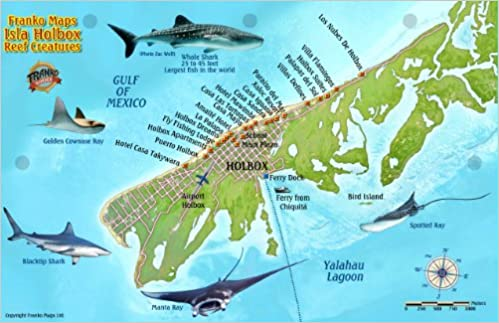 Isla Holbox Mexico Map & Reef Creatures Guide Franko Maps Laminated on