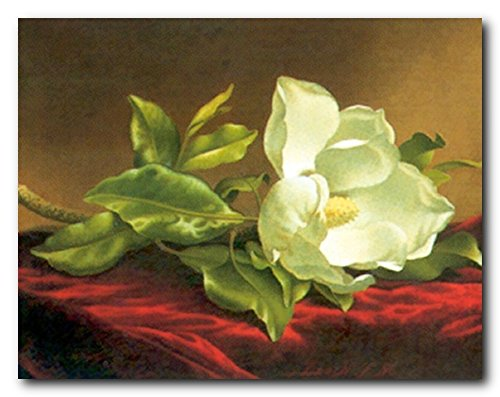 Martin Johnson Heade Magnolia (Magnolia Grandiflora Wall Decor White Flower Picture Martin Johnson Heade Art Print Poster (16x20))