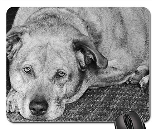 (Mouse Pads - Dog Pit Bull Labrador Mixed Breed Pet Pit Animal)