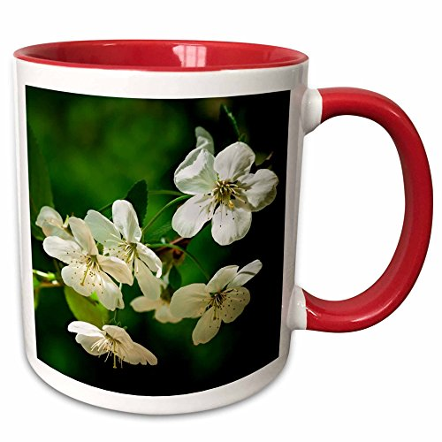 Cherry Blossoms Against Red Background (3dRose Alexis Photography - Flowers Cherry - White cherry blossoms against the emerald background. Spring beauty - 11oz Two-Tone Red Mug (mug_271683_5))