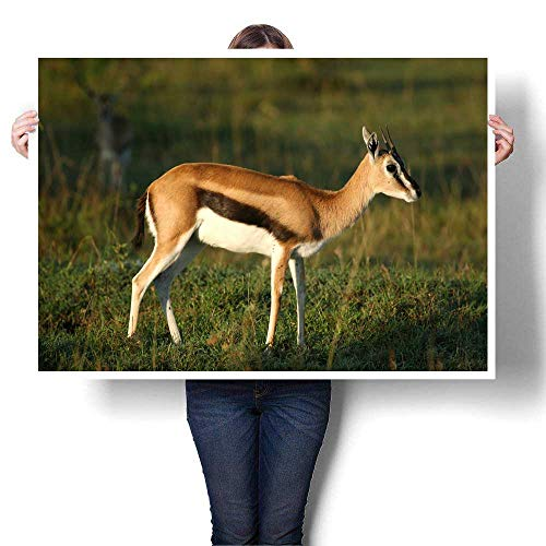 Anyangeight Canvas Prints Wall Art Thomson s Gazelle Decorative Fine Art Canvas Print Poster K 20