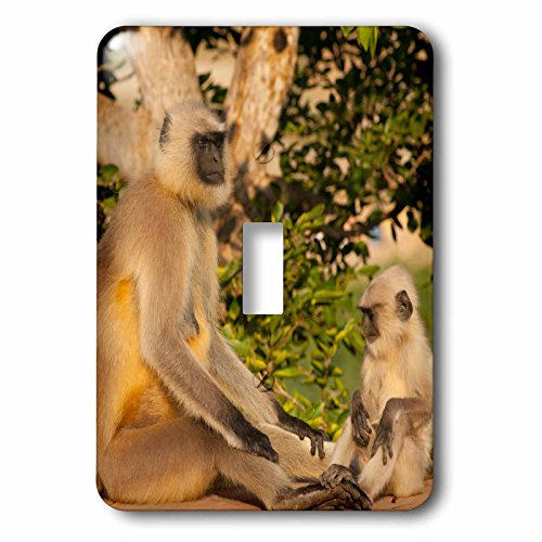Danita Delimont - Inger Hogstrom - Primates - Langur Monkey, Amber Fort, Jaipur, Rajasthan - Light Switch Covers - single toggle switch (lsp_188259_1)
