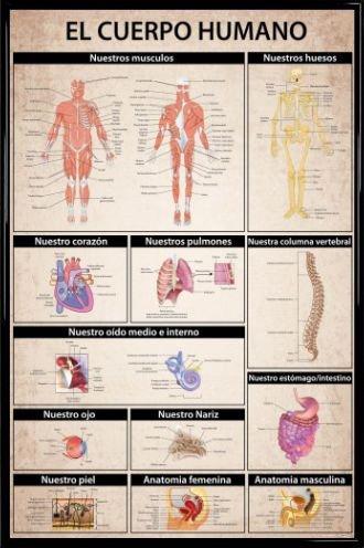 1art1® El Cuerpo Humano Póster con Marco (Plástico) - Anatomía ...