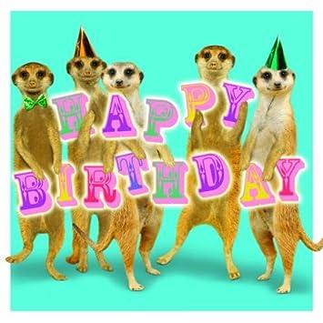 Birthday Meerkats Meerkats Birthday Card Amazon Office Products