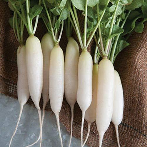 White Icicle Radish Seeds (20 Seed Pack)