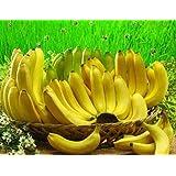 100 pcs Banana Seeds,dwarf fruit trees,Milk Taste,Outdoor Perennial Fruit Seeds For Garden plants 6