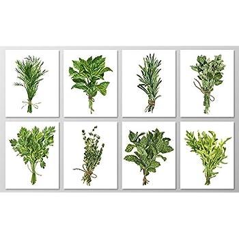 Herb Wall Art #A076   Set Of 8 Botanical Art Prints (8x10).