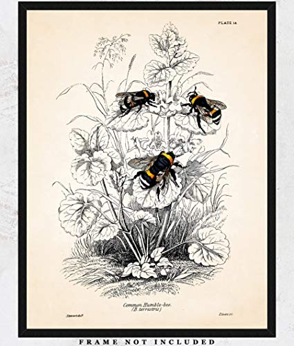 Vintage Bumble Bees Wall Art Print: Unique Room Decor for Boys, Girls, Men & Women - (11x14) Unframed Picture - Great Gift Idea