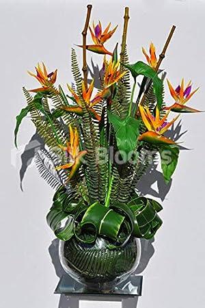 Silk Blooms Ltd - Pecera Artificial con Forma de pájaro de paraíso y Flores de bambú con pecera de Cristal: Amazon.es: Hogar