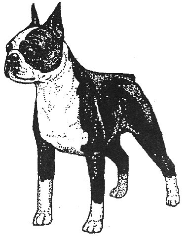 Dog Rubber Stamp - Boston Terrier-1E (Size: 2
