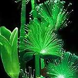 #7: 100Pcs Emerald Fluorescent Flower Seeds, Easy Grow Rare Emerald Flower Seeds Night Light Emitting Plants for Garden Decoration