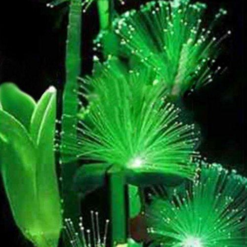 100Pcs Emerald Fluorescent Flower Seeds, Easy Grow Rare Emerald Flower Seeds Night Light Emitting Plants for Garden (Hummingbird Garden Plants)
