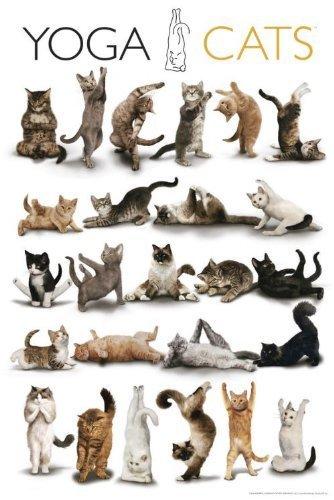 Amazon.com: Super master EX 2542 Super small piece yoga Cats ...