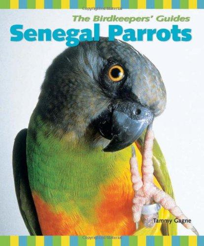 Senegal Parrot - 7