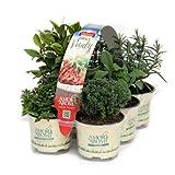 Piante aromatiche fresche (in vaso Ø 9 cm) ideali per grigliate, N.6 x 2 pack