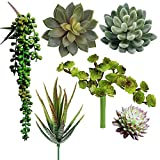 Wansang Pack of 6 Assorted Artificial Succulents Picks Textured Faux Succulent Pick Succulent Stems Fake Succulent Bouquet String of Pearls Succulent Faux Succulent Floral Arrangement Accent
