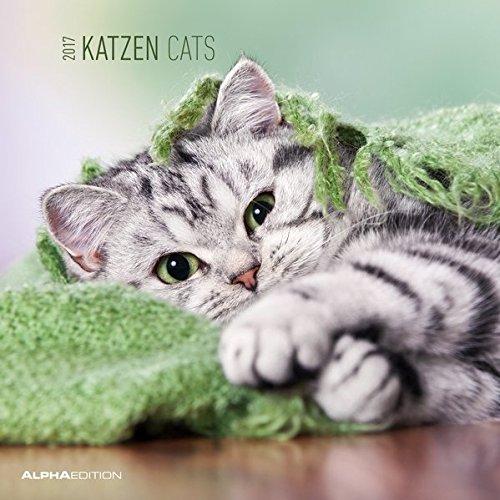 Katzen 2017 - Cats - Broschürenkalender (30 x 60 geöffnet) - Tierkalender - Wandplaner