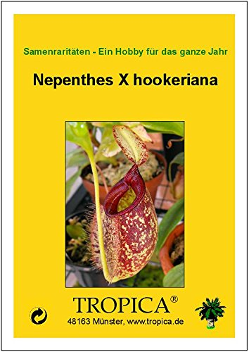- 10 Samen inklusive Kultursubstrat TROPICA Nepenthes X hookeriana