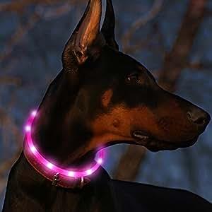 Amazon Com Led Dog Collar Usb Rechargeable Glowing Pet
