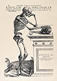 Andreas Vesalius: Human Anatomy Print ''Skeleton Contemplating a Skull'' (1543). Historical/Medical Fine Art Print/Poster. (84.1cm x 59.4cm)