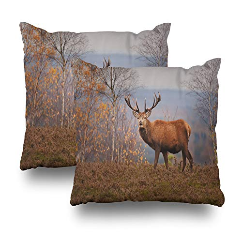 (KJONG Set of 2 Deer Autumn Day Animal Autumn Autumn Autumn Colors Autumn Day Beautiful Animal Square DecorativePillow Case 20 x 20inch Zippered Pillow Cover for Bedroom Living Room(Two Sides Print))